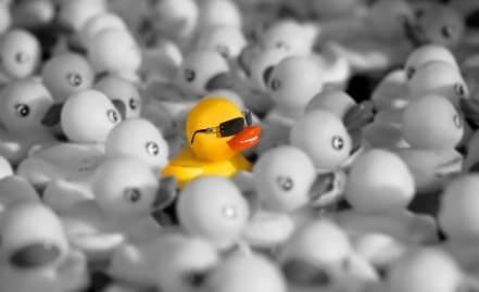 Un canard différent des autres illustre bien le surdoué dans le monde